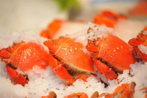 Fresh seafood crab