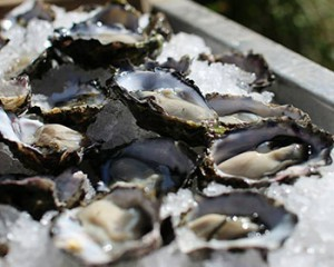 wholesale oysters