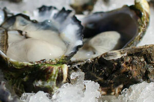 fresh seafood oyster